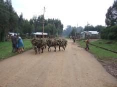 Landscape outside Addis