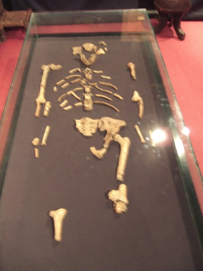 Lucy, one of oldest human beings ever found