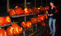 A exhibit of carved pumpkins on halloween night in Vienna, Virginia