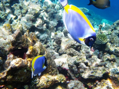 Tropical fish in Kani, the Maldives