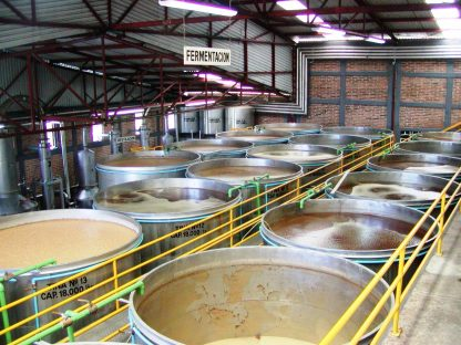 Blue agave juice fermenting into tequila, in Tequila, Mexico